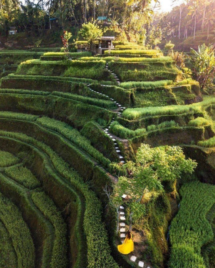 Look for A Villa Near Tegalalang Rice Field